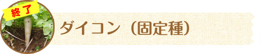 カブ(固定種)