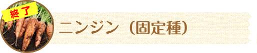 ニンジン(固定種)