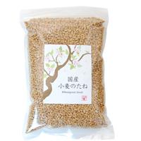 プレマシャンティ 国産 小麦のたね  500g