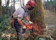 森林伐採と地球温暖化の問題