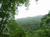 竹布:竹の育成林