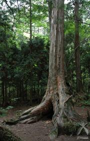 日本の文化はヒノキの文化